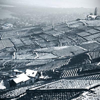 Vineyards in winter