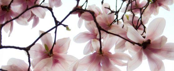 Spring (up)