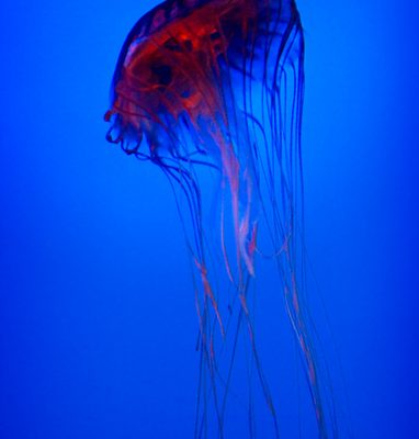 jellyfish from outer space